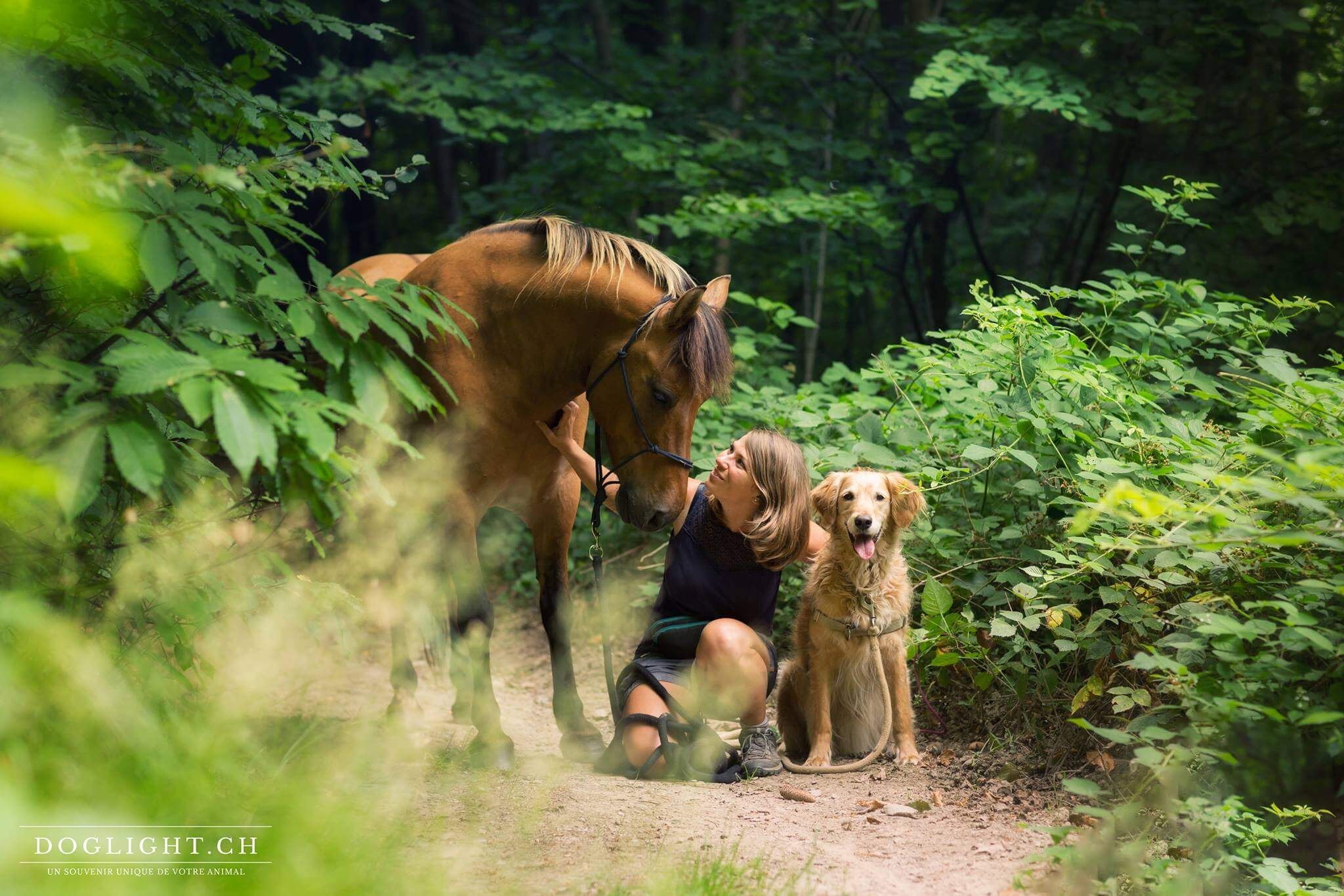 Ma passion pour les chevaux, les chiens, le clicker