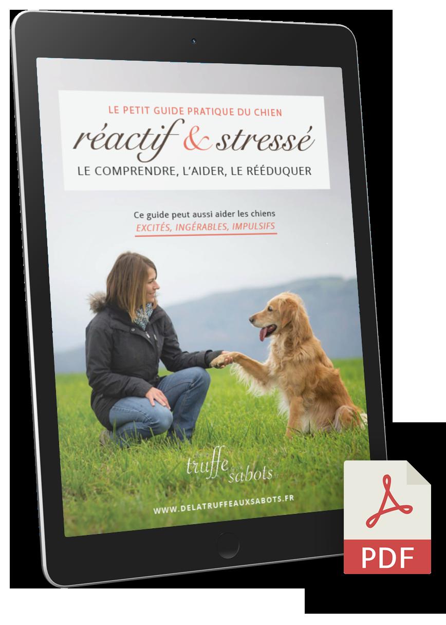 Guide gratuit du chien réactif
