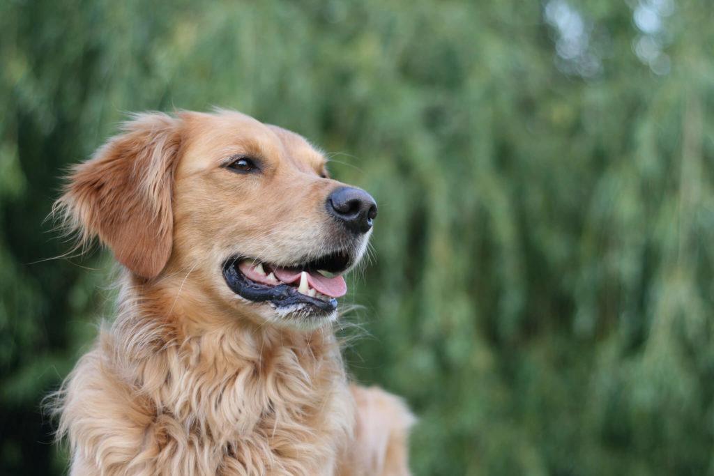 10 astuces faciles et inspirantes pour prendre son chien en photo