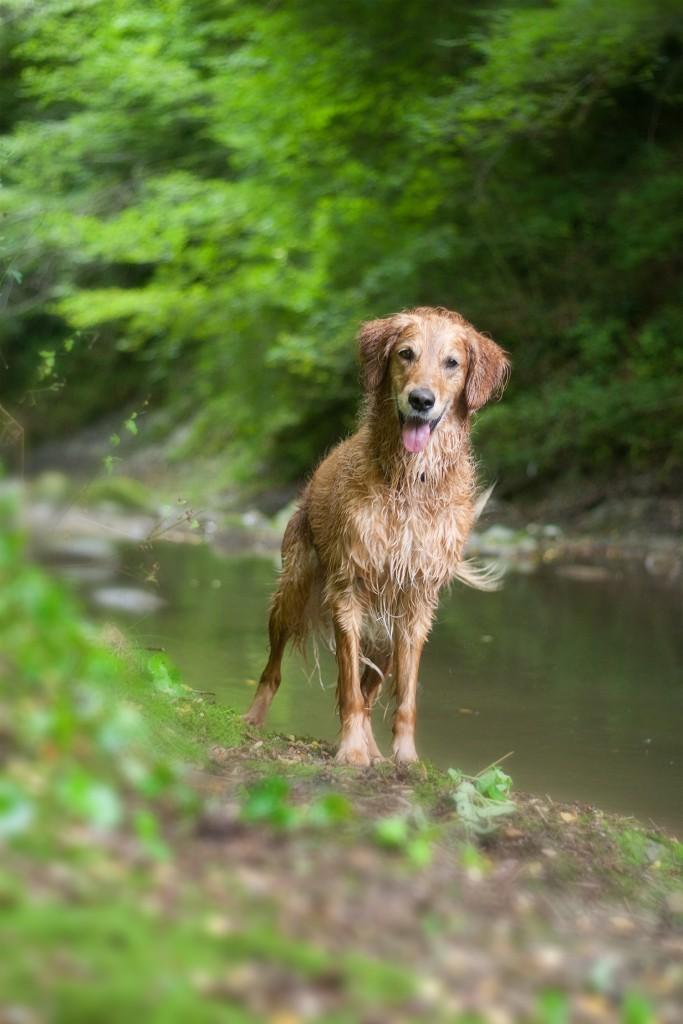 Comment enrichir la vie de son chien ?