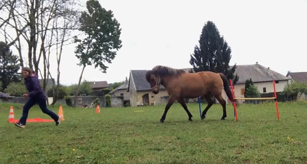 [Vidéo] Moka et son ballon «Target» !
