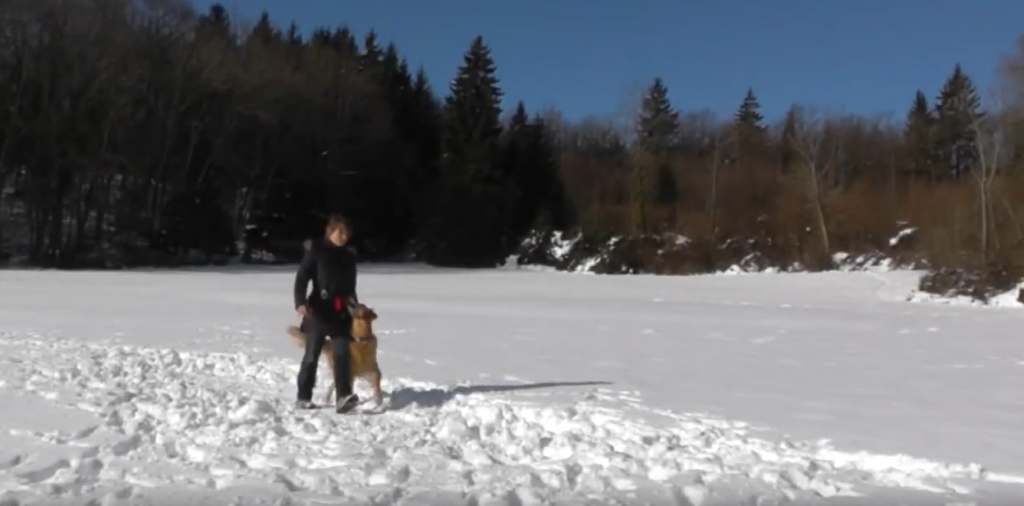 [Vidéo] Dog Dancing dans la neige