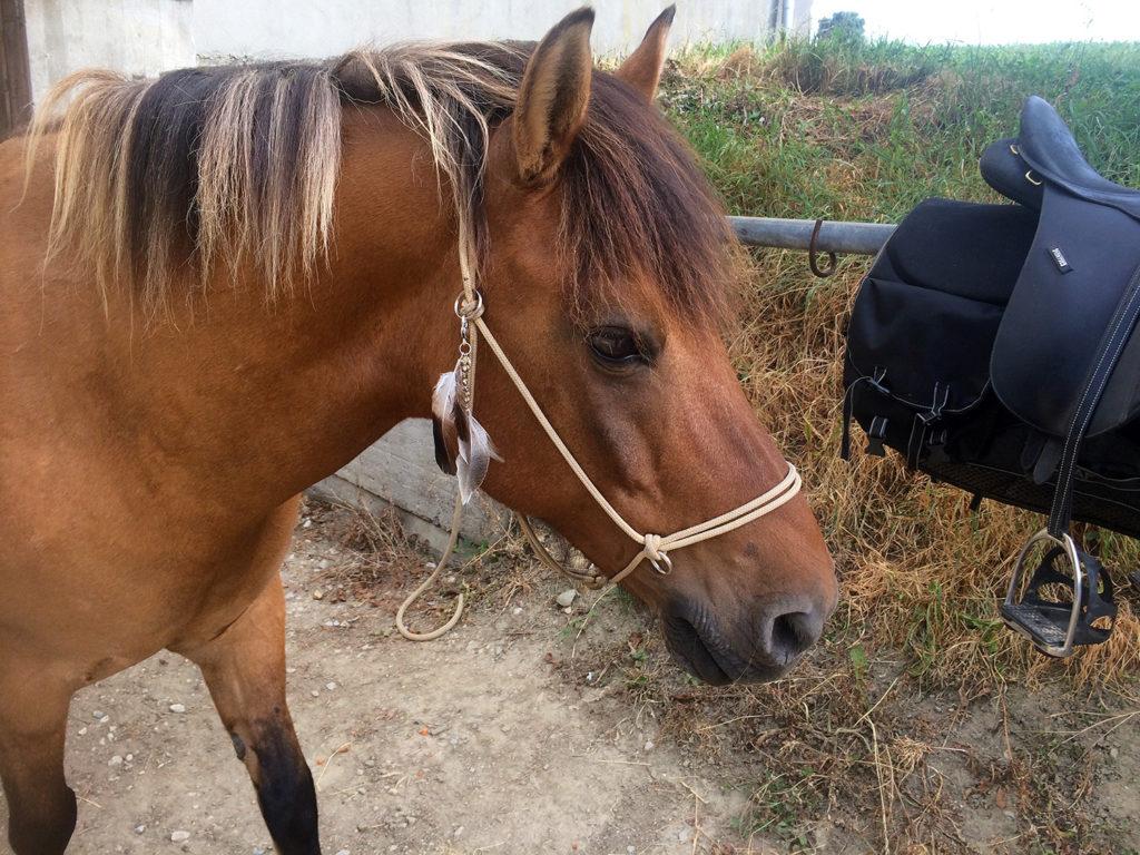 [DIY] Une déco en plume pour le licol ethologique de son cheval