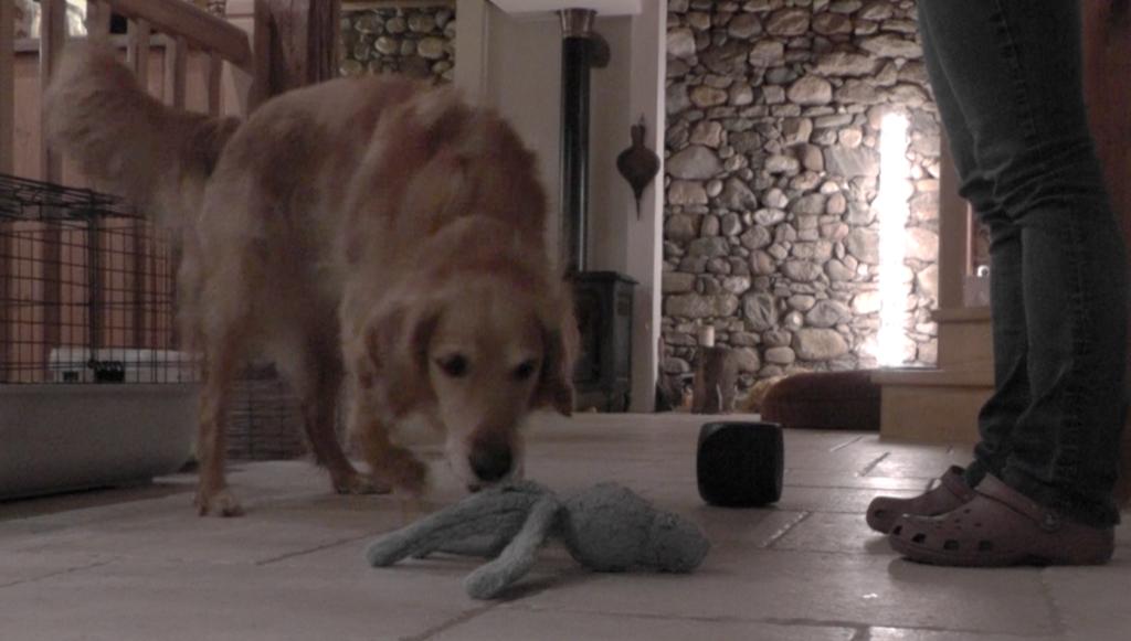 Apprendre à son chien à différencier des objets