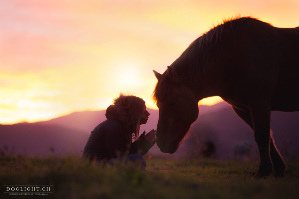 Ces belles citations sur les chevaux