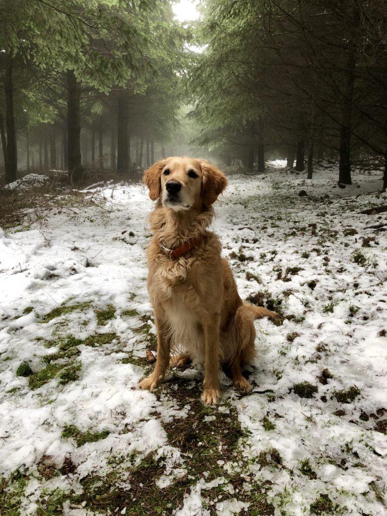 Apaiser et calmer son chien