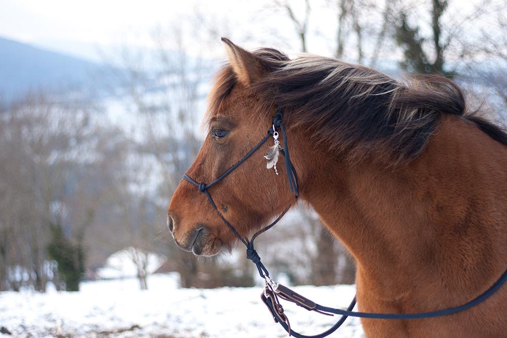 Le clicker training au service des peurs du cheval ?