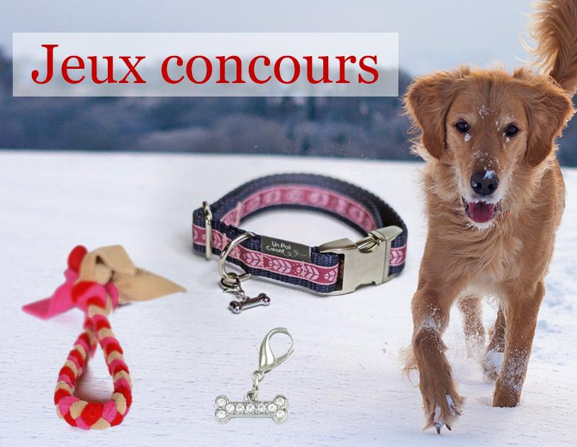 Jeux concours : collier et tug pour chien à gagner