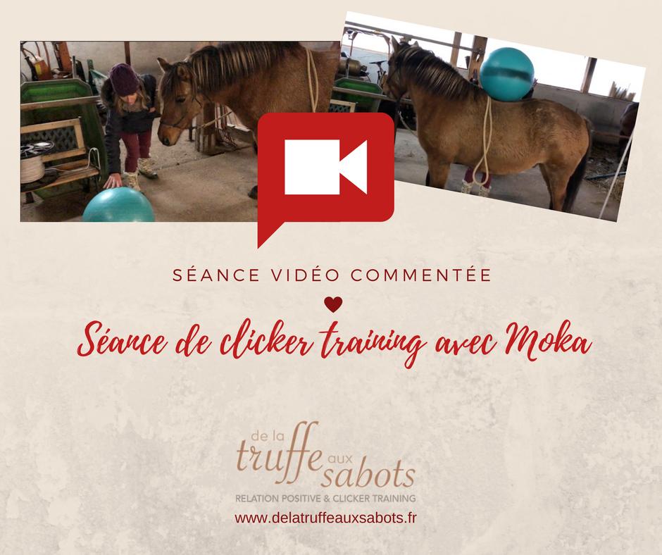 [Vidéo] Séance commentée au clicker training