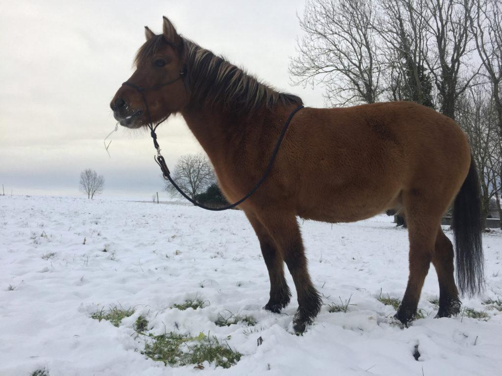 Exercice pour pour muscler son cheval en s'amusant