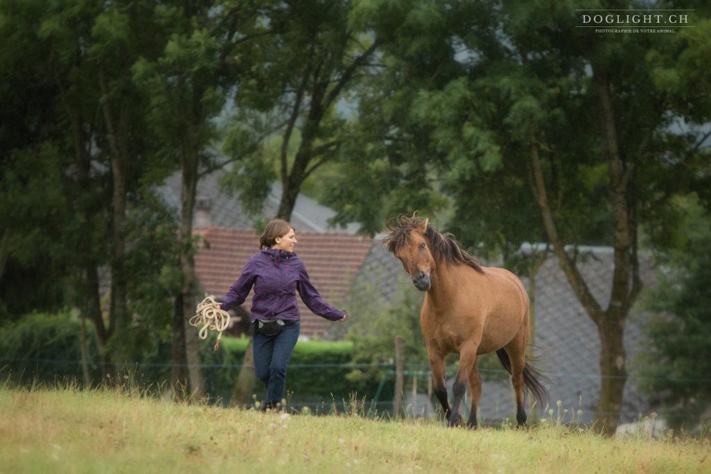 Le clicker training et la frustration chez le cheval