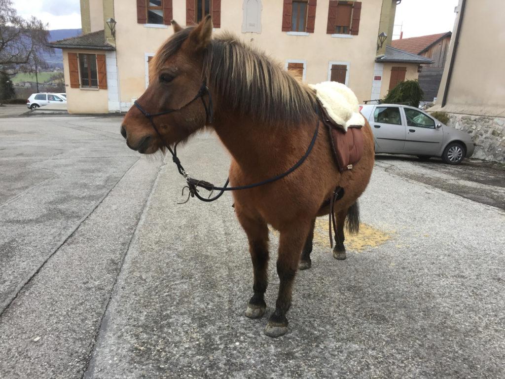Touch-it au Clicker Training à cheval et en extérieur