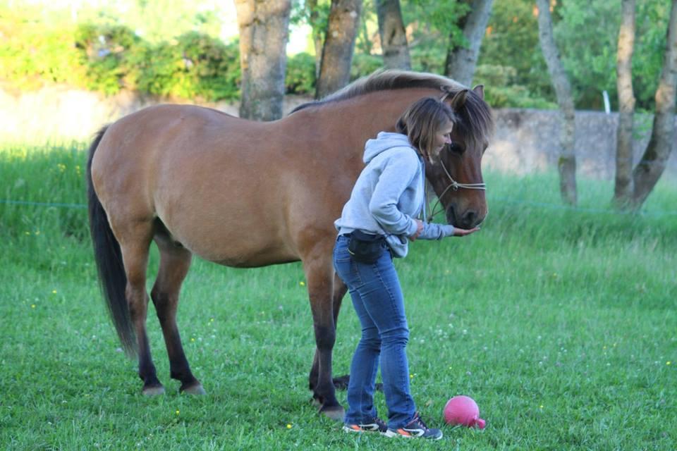 Mon cheval prend les récompenses avec les dents