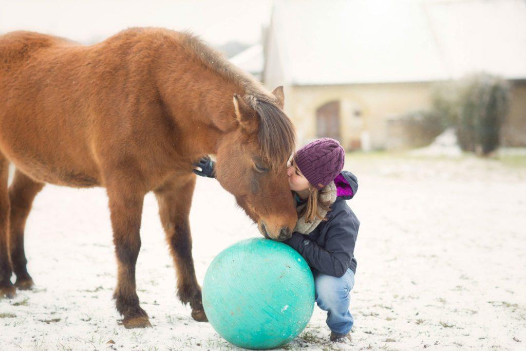 Accessoires pour débuter le clicker training avec son cheval