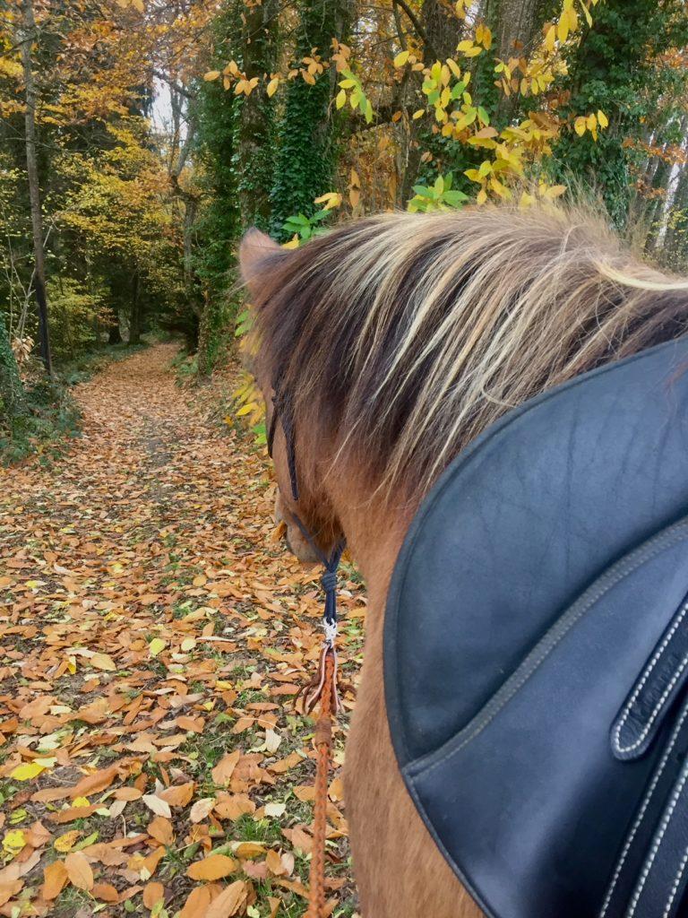 Balade seule avec mon cheval cerveau droit introverti (rbi)