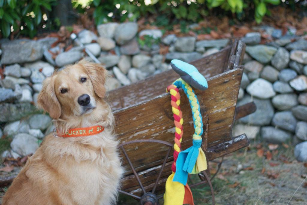Collier brodé pour chien avec numéro de téléphone