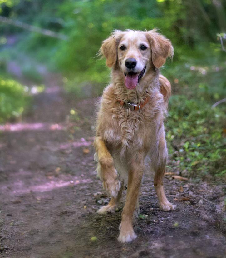 Flicker, un chien réactif : état des lieux avant sa rééducation comportementale