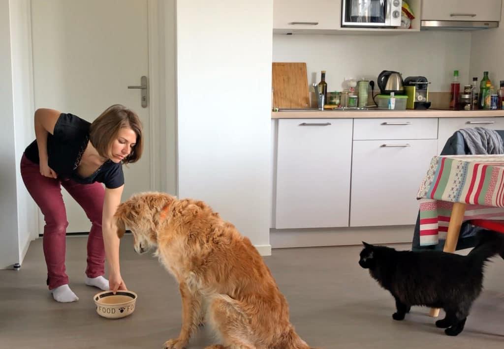 Jeux d'auto-contrôle pour le chien réactif, impulsif, excité