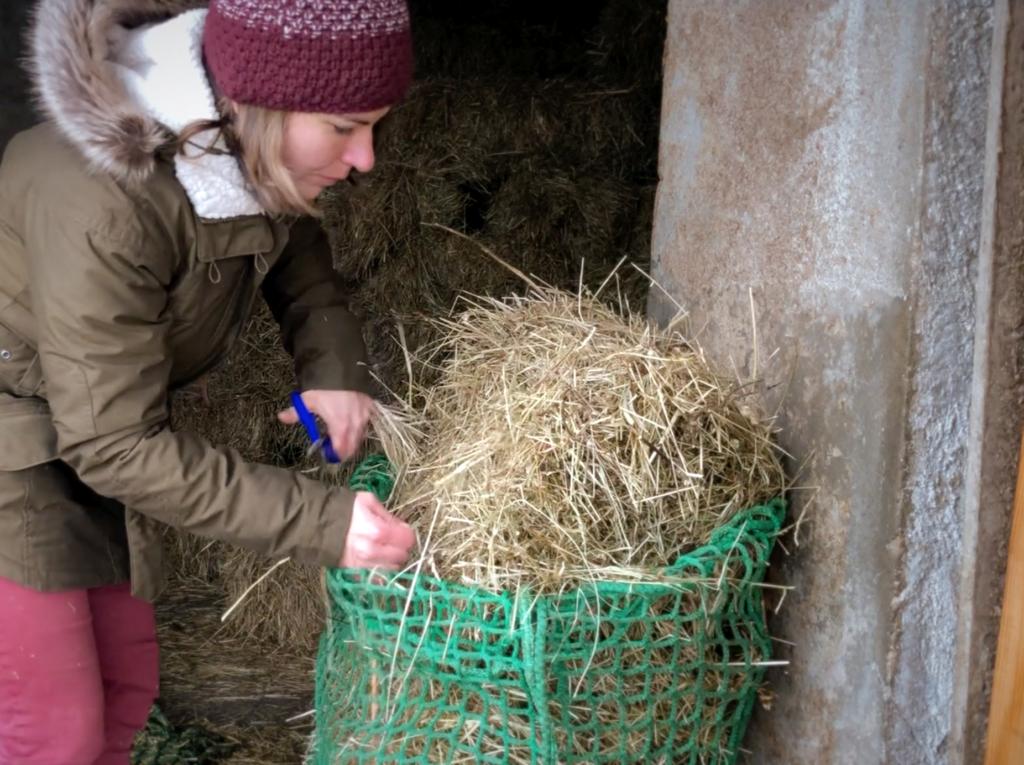 Avoir ses chevaux à la maison : quelle routine en hiver ?