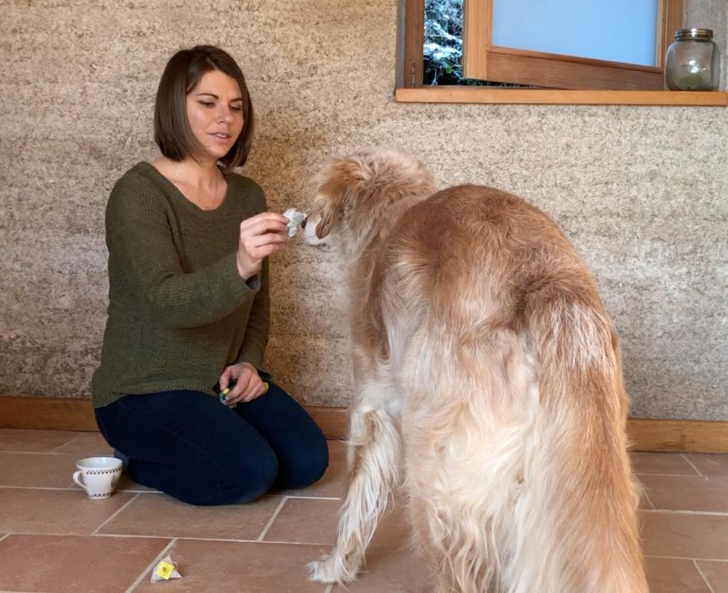 Stimuler son chien avec ce jeu d'odorat