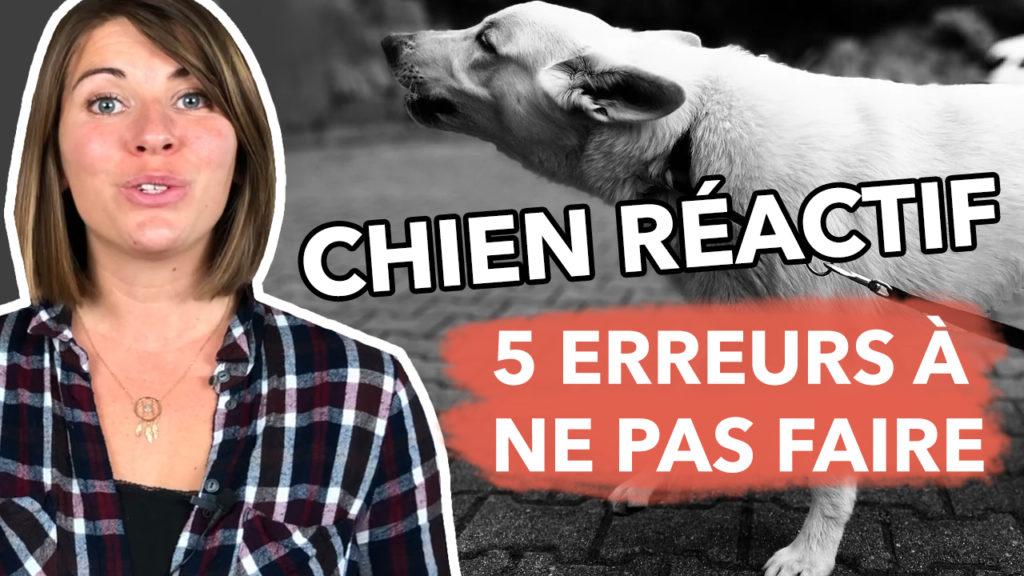 5 erreurs à ne pas faire quand on a un chien réactif