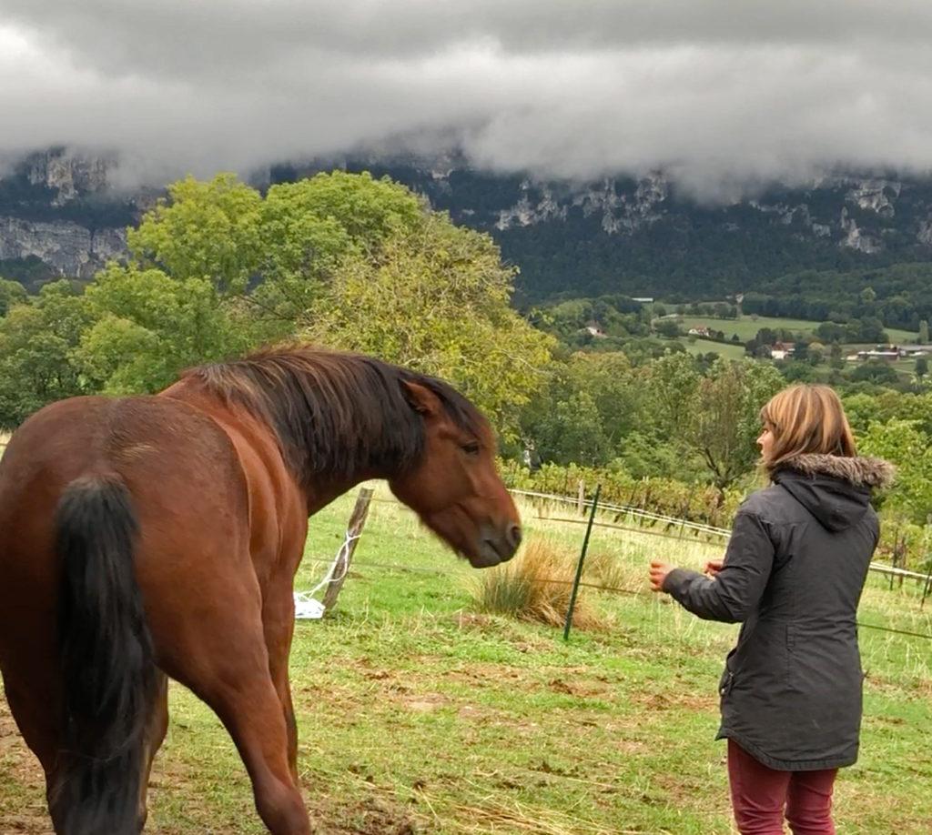 Apaiser un cheval menaçant avec la nourriture – Atelier en ligne le 16 mai 2021
