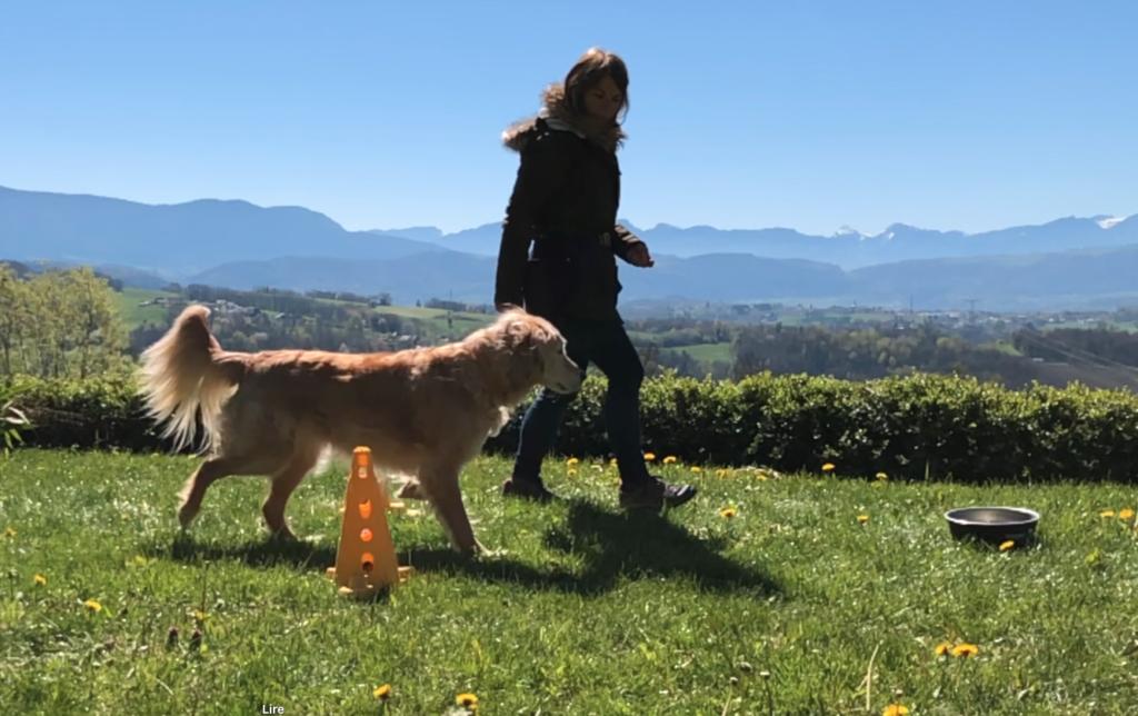 Exercice de proprioception avec son chien (Fitness canin)