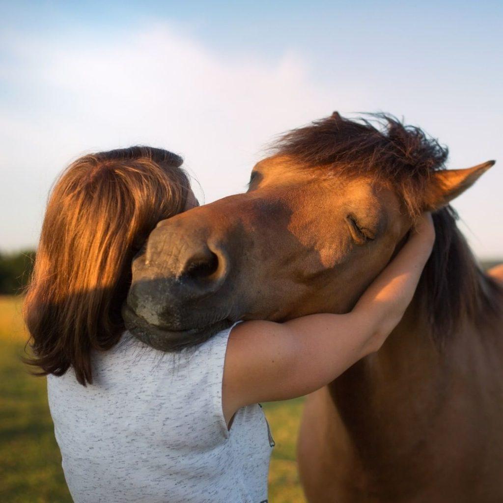 FAQ : Ma relation avec mes animaux