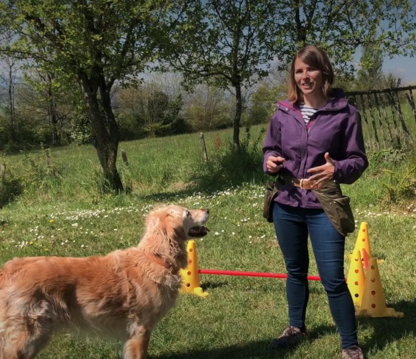 Apprendre les positions à distance à son chien