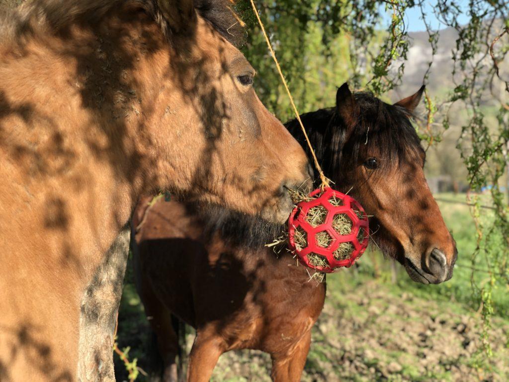 Comment occuper son cheval ?