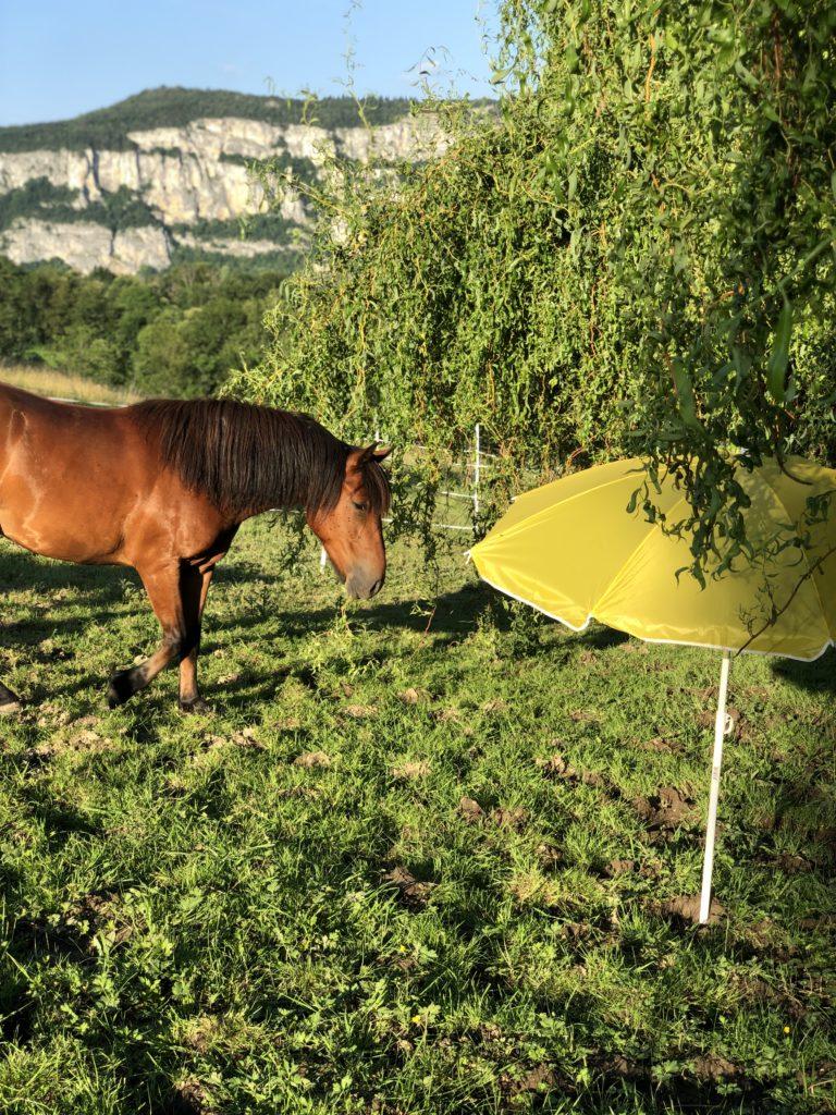 3 idées d'exercices pour le cheval qui a peur !