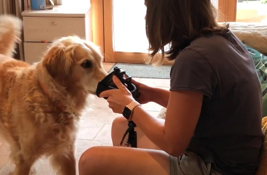 VLOG : Habituer son chien à mettre et avoir la muselière